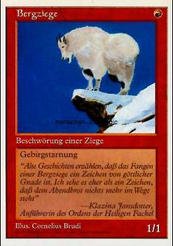 Bergziege (Mountain Goat )