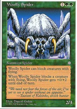 Woolly Spider