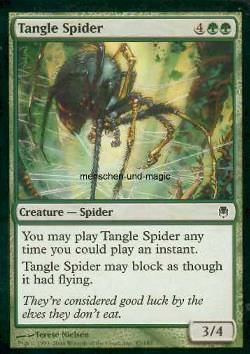 Tangle Spider (Knäuelspinne)
